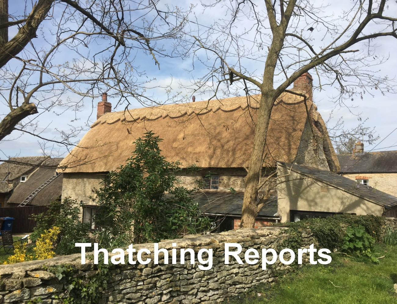 Thatching Reports
