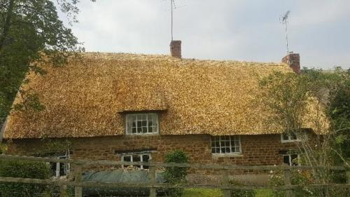 new-thatch-roof2