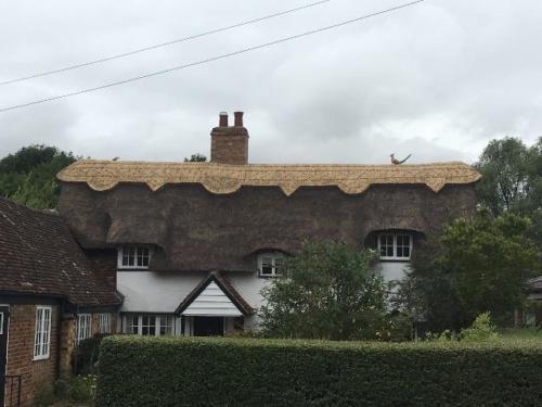 roof-animals