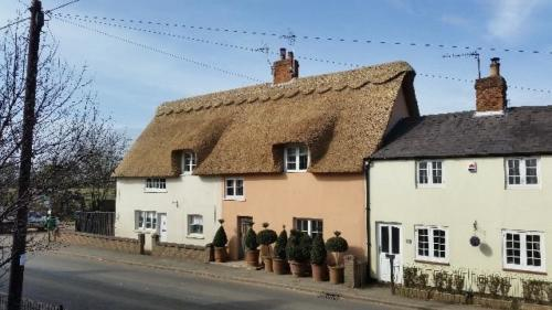 thatch-cottage-trees-in-pots-outside